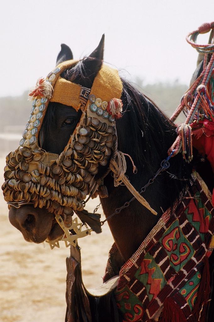 Intronisation du roi des Bariba. La fête traditionnelle de la Gaani. Les parures des chevaux sont toutes fabriqués par les cavaliers eux-mêmes. Ici ce sont des capsules de bouteilles qui ont été utilsées pour la décoration. Le hackamore est d'une fabrication artsanale locale.
